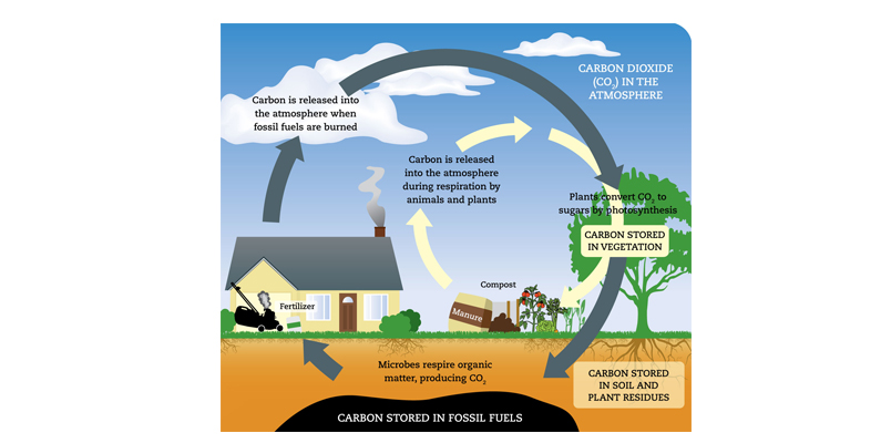 Carbon Cycle UCS